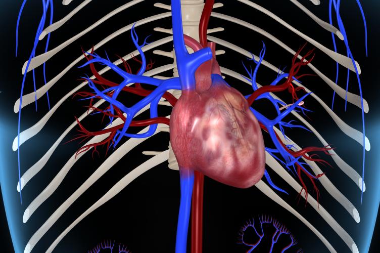 Cirugía Cardíaca Miniinvasiva